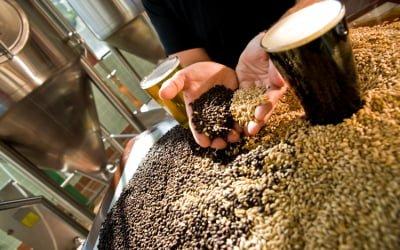 Craft Brewing Gaining in Popularity